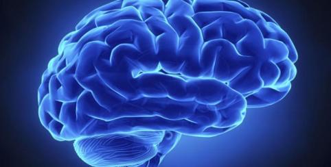 1036-cerebro-humano