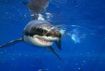 Resultado de imagen para s tiburones sería capaz de frenar el párkinson
